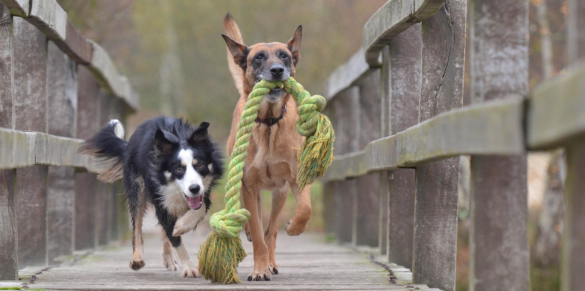 Meticci Vs Cani di razza: ma è davvero necessario?