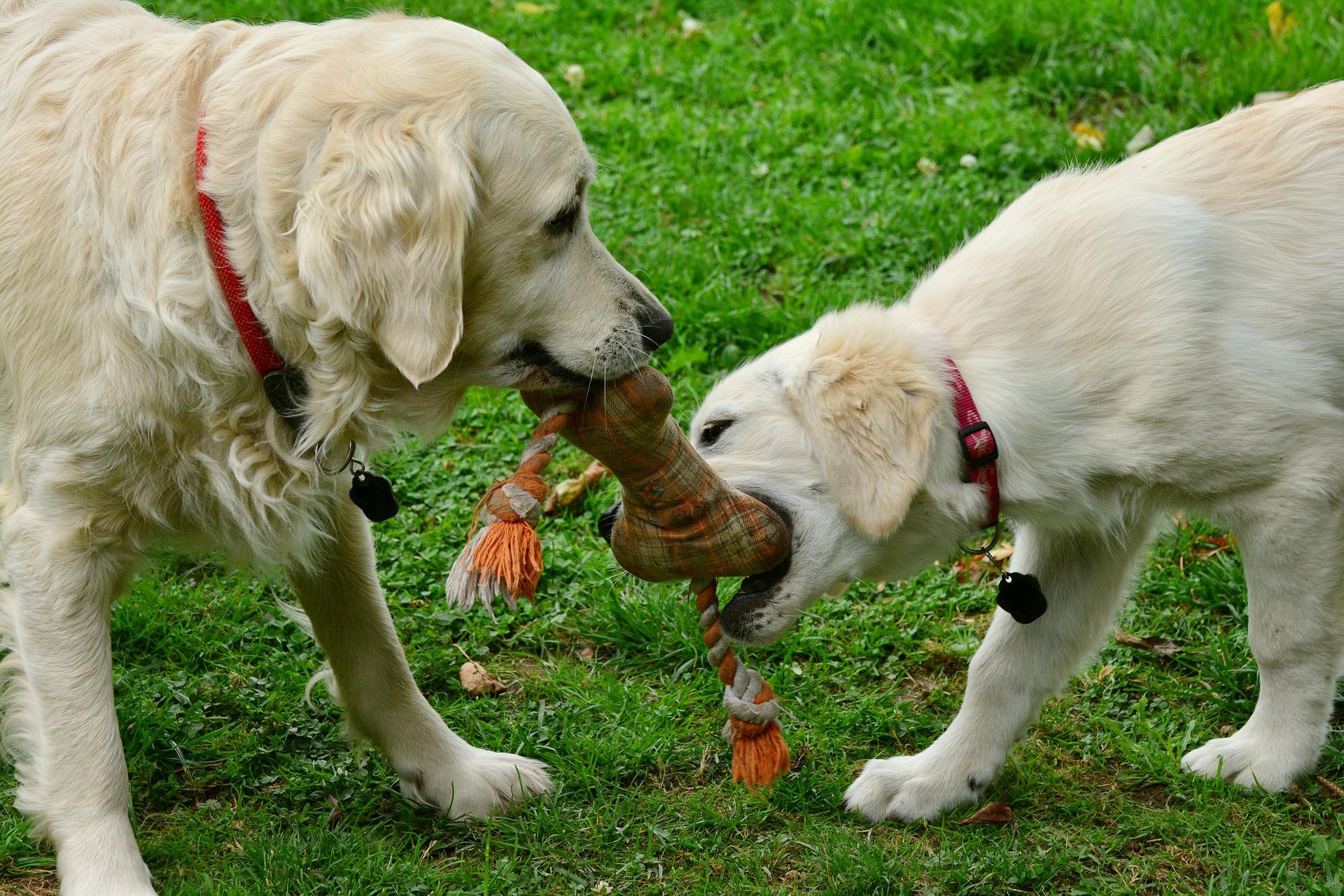 Dai, giochiamo insieme!