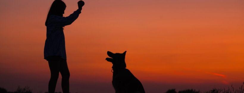 Anche i cani anziani possono essere educati?