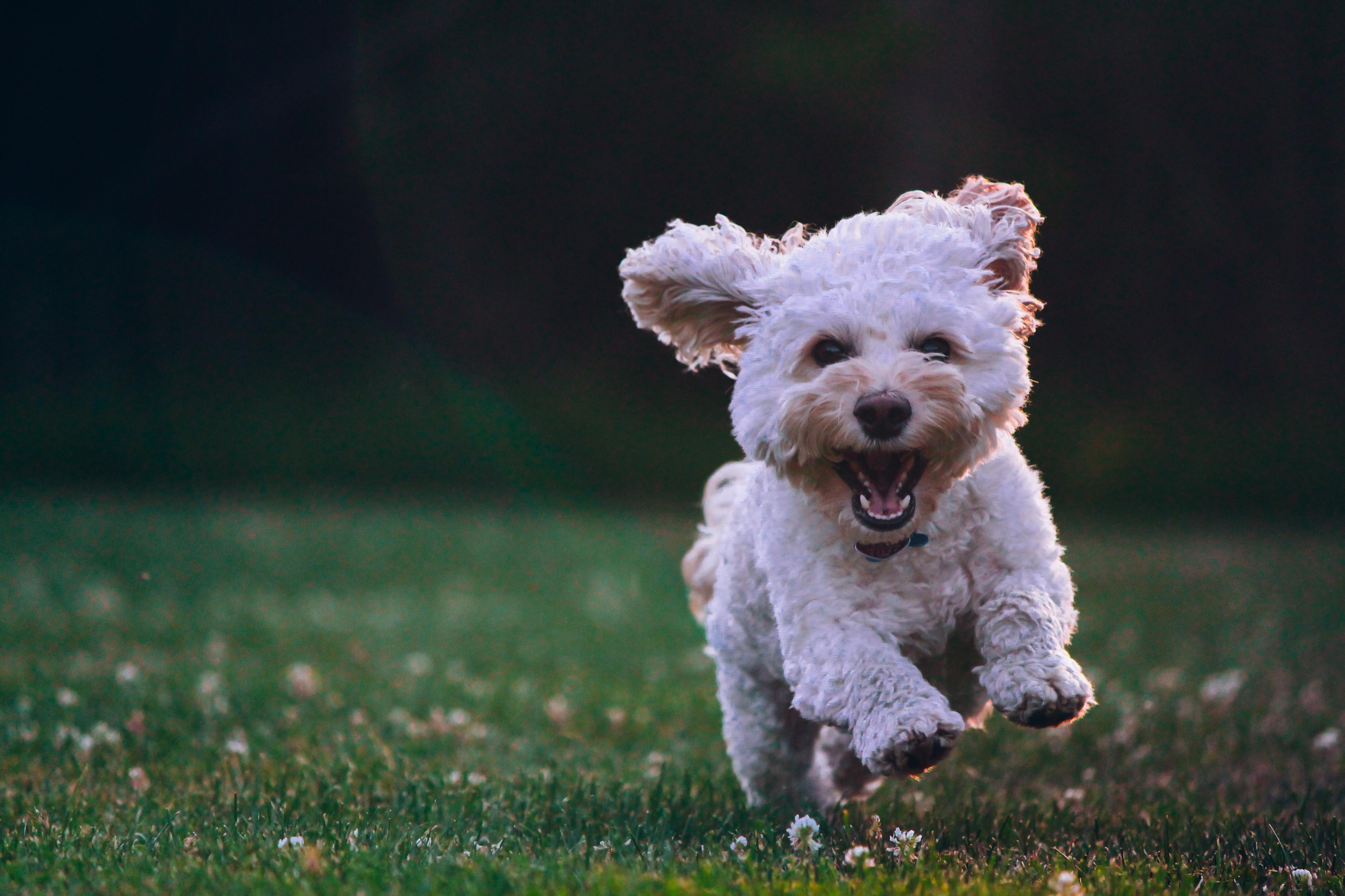 Il mio cane ha paura di una sola persona, che fare?