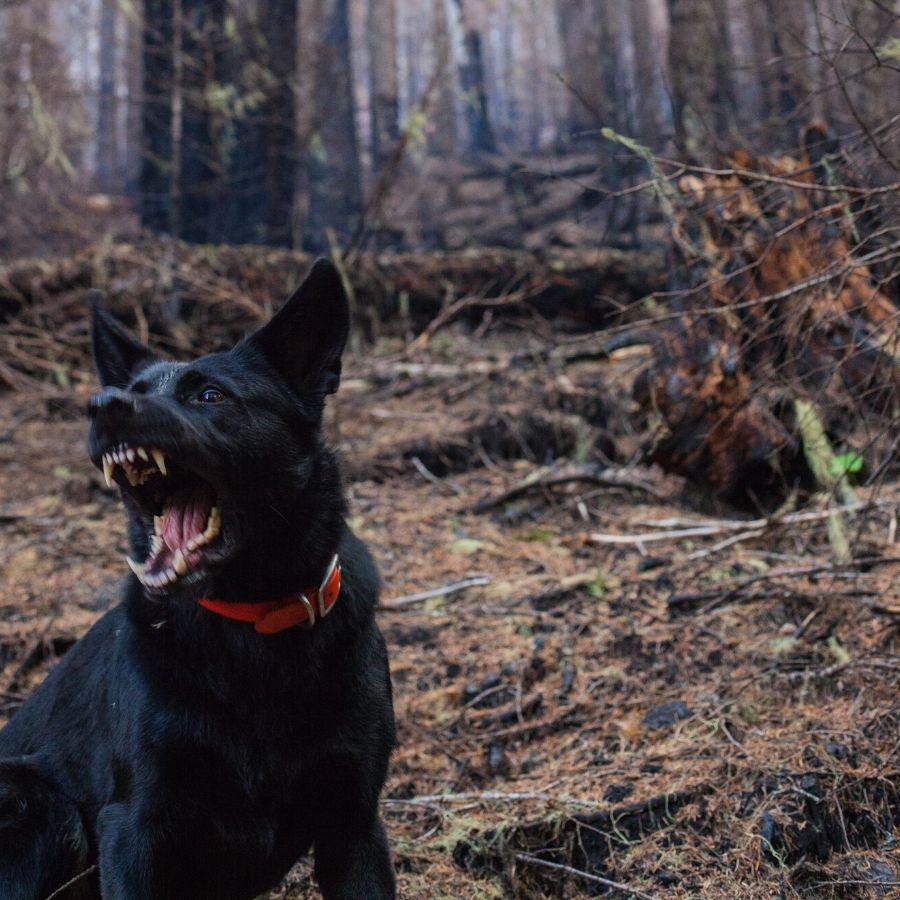 L'Aggressività del cane dipende dalla sua razza?