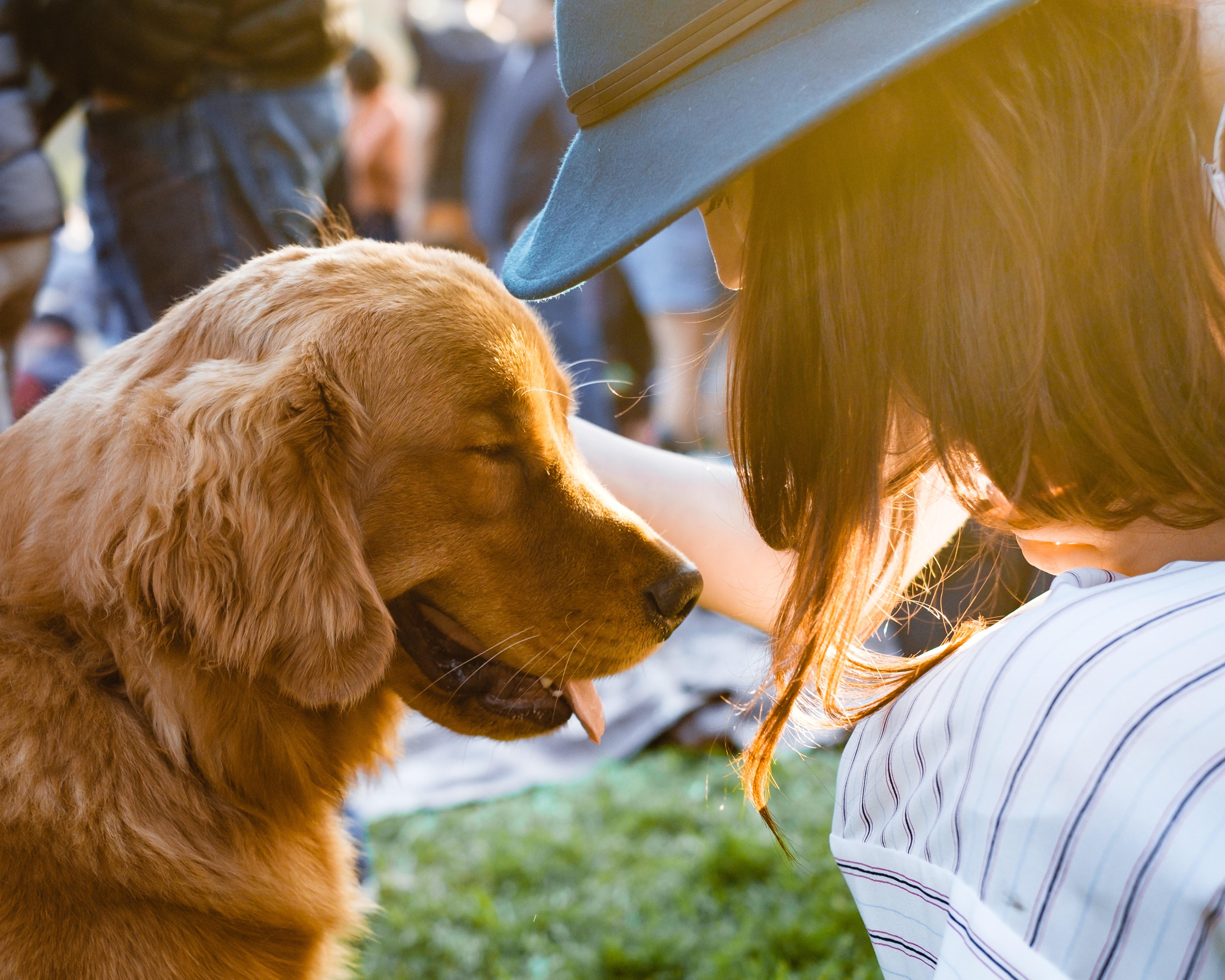 Come socializzare con un cane correttamente