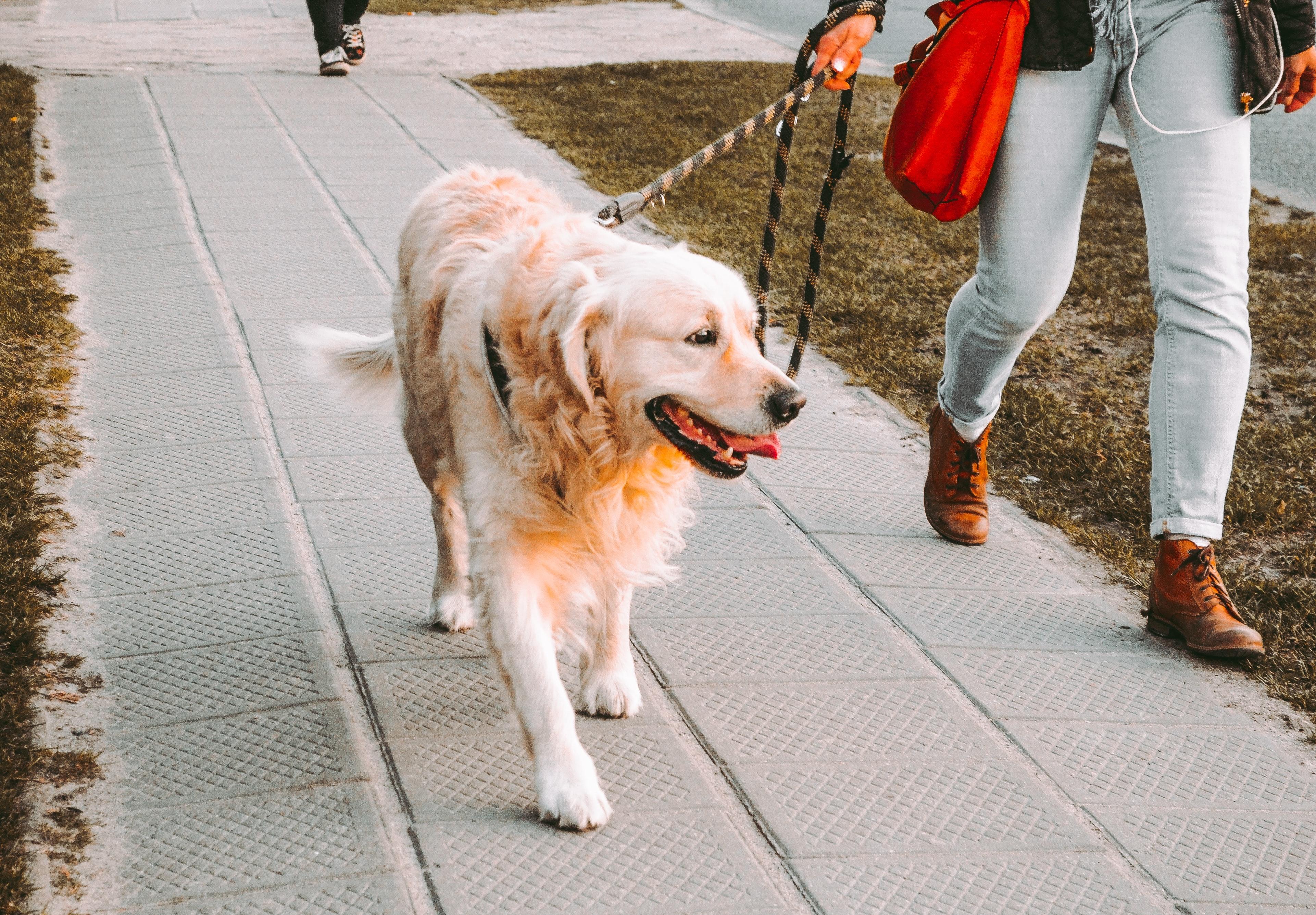 Come posso insegnare al mio cane a non tirare al guinzaglio?
