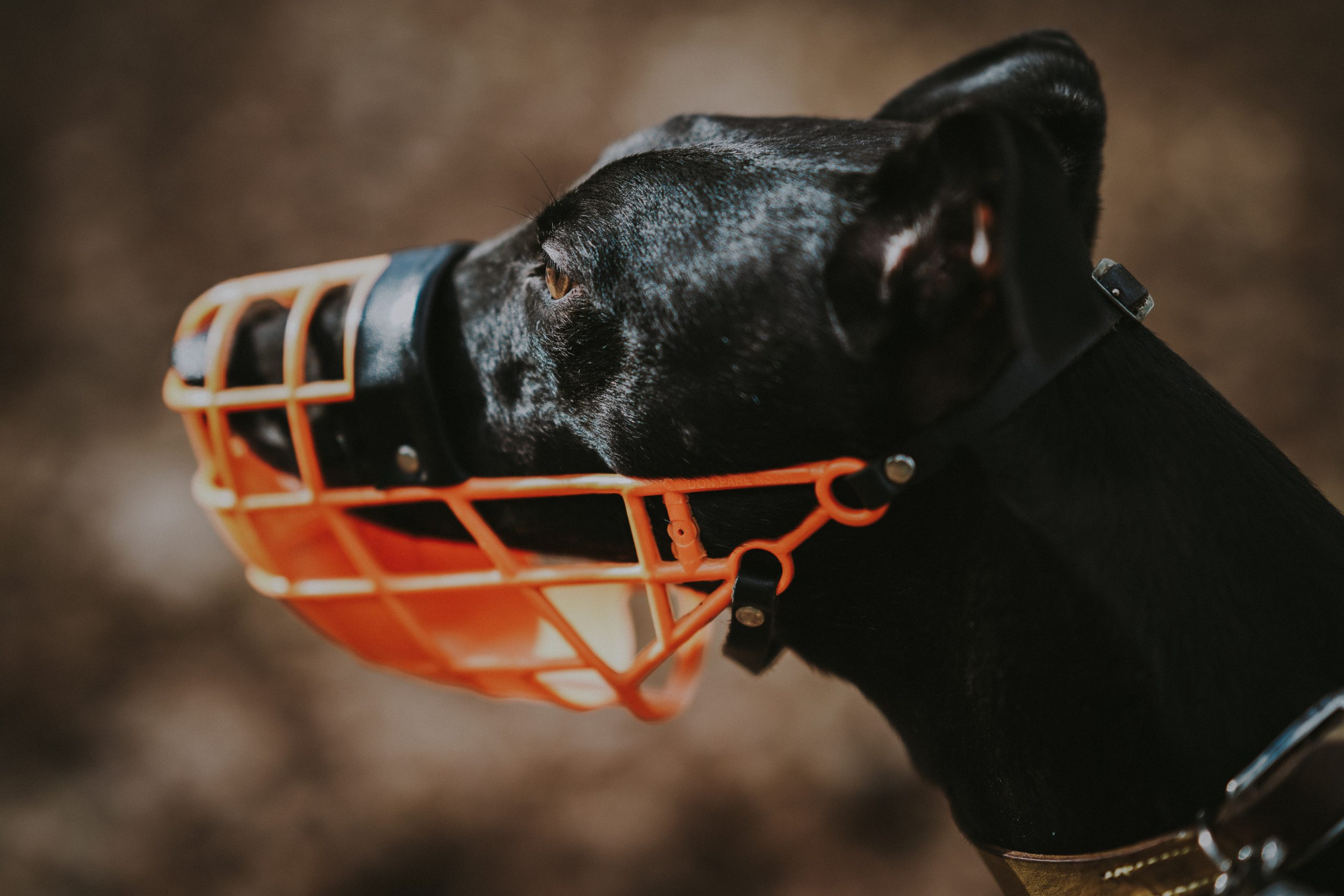 Museruole per cani: quando usarle?