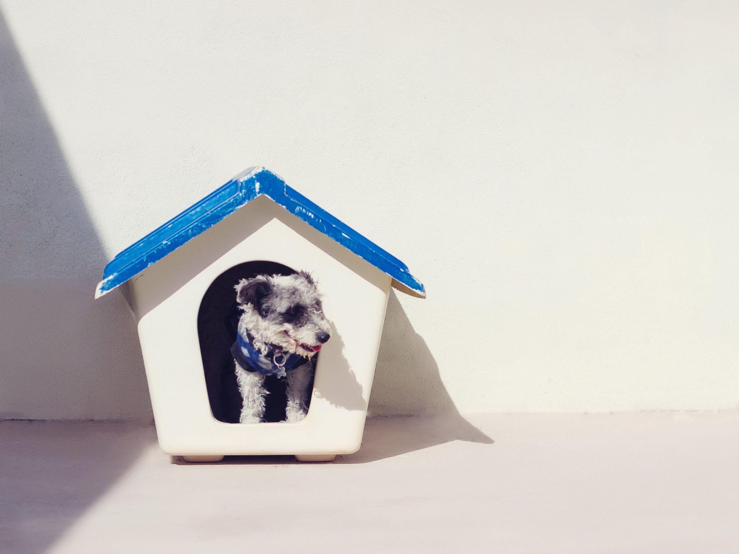 Il mio cane adulto ha iniziato a fare pipì dentro casa, perché?