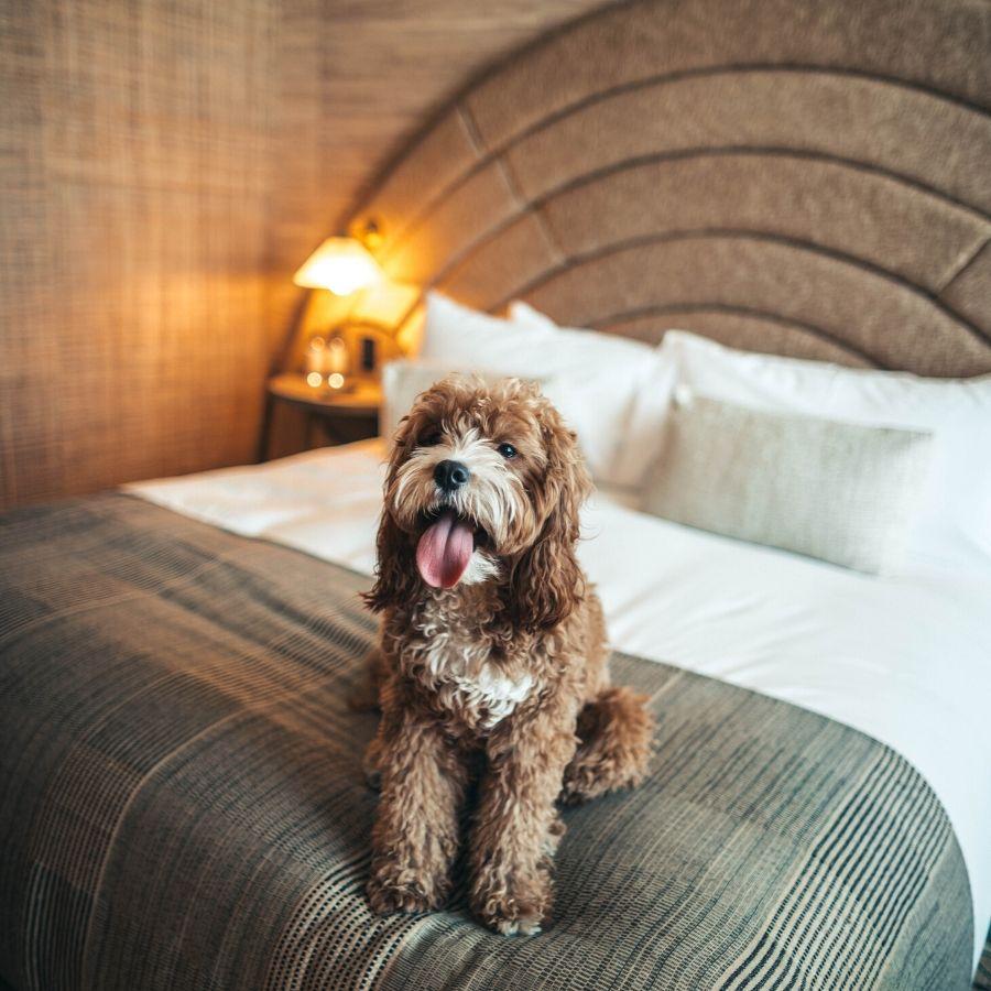 Posso far dormire il cane sul mio letto?