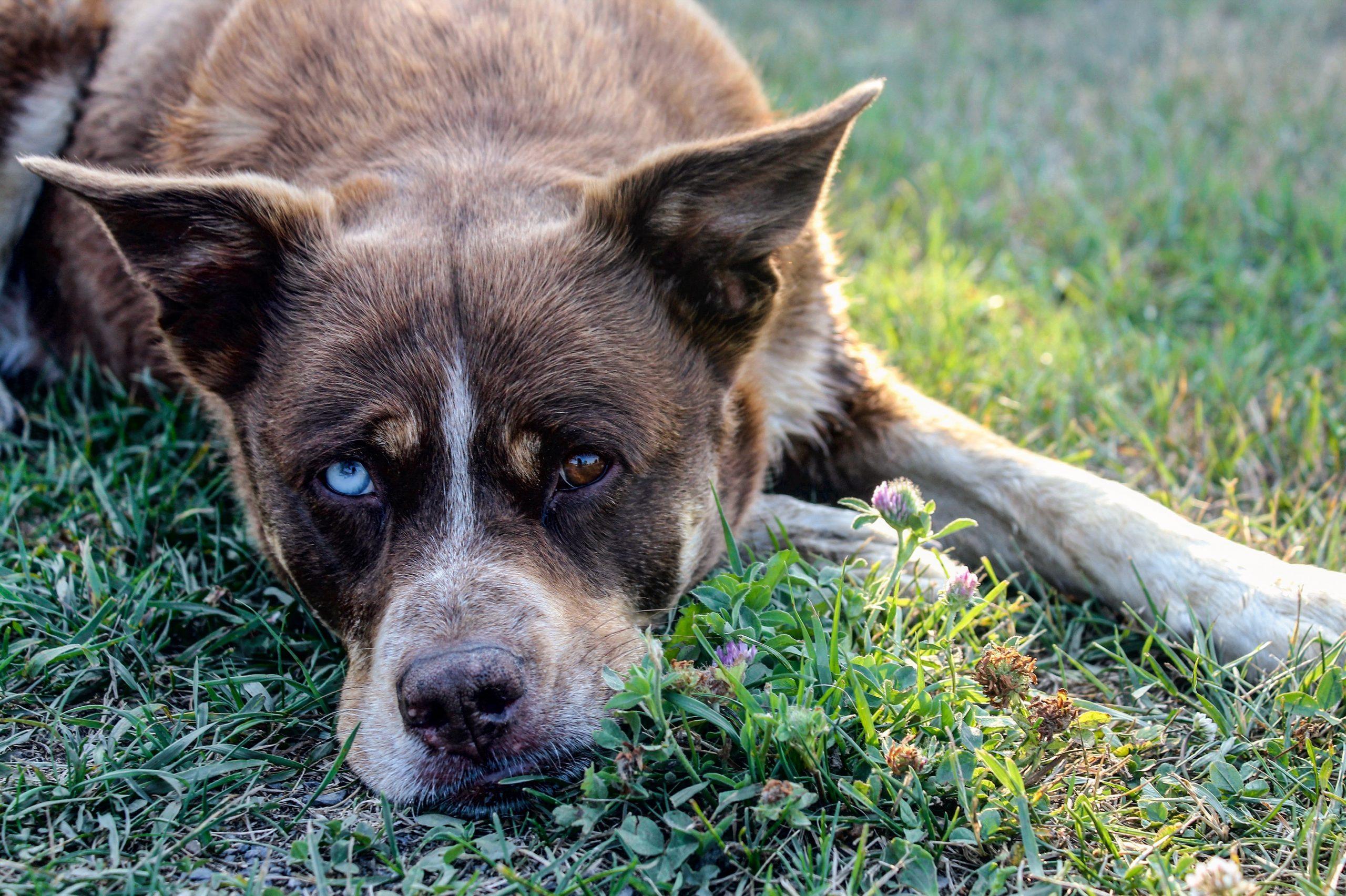 Psicologia canina e comportamento del cane